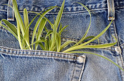 Plant growing in my pocket Stock Images