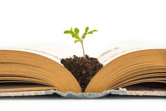 Plant growing from an old opened book, isolated on white background, education or recycling concept Royalty Free Stock Images