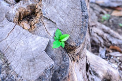 Plant growing on old tree stump, business concept Royalty Free Stock Photos