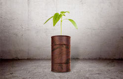 The plant growing out of brown barrell Royalty Free Stock Photos