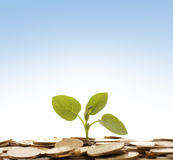 A plant growing out of coins on a blue background Royalty Free Stock Photos