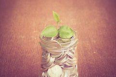 Plant growing out of coins Royalty Free Stock Photos