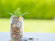 Plant growing out of coins in glass jar. On the green grass for money saving financial concept Royalty Free Stock Photography