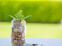 Plant growing out of coins in glass jar Royalty Free Stock Images