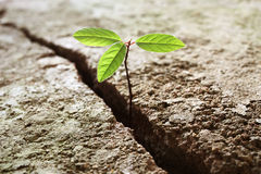 Plant growing out of concrete. Sprout growing out of concrete, concept of business break through stock photo