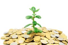 Plant growing out of gold coins Royalty Free Stock Photos
