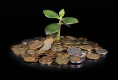 Plant growing out of gold coins Royalty Free Stock Image