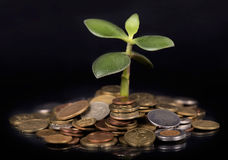 Plant growing out of gold coins Stock Images