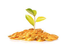Plant growing out of gold coins isolated on white Royalty Free Stock Image