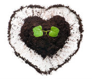 Plant growing out of a heart shaped soil. Stock Images