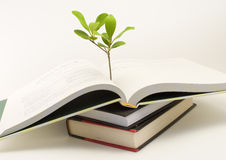 Plant growing out of open book. A small plant sticks up from an open book stock photo