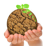 Plant growing out of parched planet in hands Stock Photos