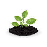 Plant growing out of soil isolated Stock Image