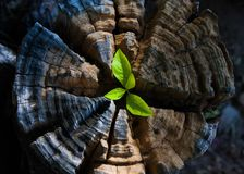 Plant growing out of a tree stump Royalty Free Stock Photos