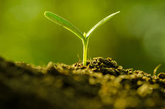Plant growing over green background Royalty Free Stock Photography