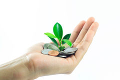 Plant growing from pile of coins on hand Stock Photo