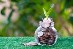 Plant growing from pile of coins. Savings and investment concept. Copy space save rich finance money business cash currency wealth financial banking loan royalty free stock images