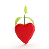 Plant growing in a red heart Stock Photography