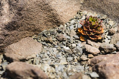 A plant growing on rocks Stock Photography