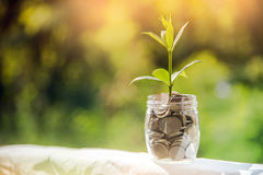 Plant Growing In Savings Coins, Investment And finance Concept. Stock Photos