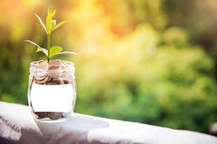Plant Growing In Savings Coins, Investment And finance Concept. Royalty Free Stock Photo