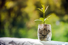Plant Growing In Savings Coins, Investment And finance Concept. Royalty Free Stock Photography