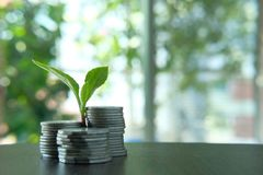 Plant Growing In Savings Coins - Investment And Interest Concept Royalty Free Stock Photo