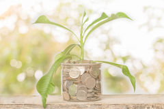Plant Growing In Savings Coins Royalty Free Stock Images