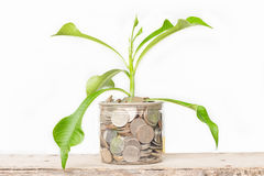 Plant Growing In Savings Coins Royalty Free Stock Image