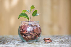 Plant Growing In Savings Coins Royalty Free Stock Photography
