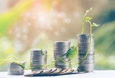 Plant Growing In Savings Coins - Investment And Interest Concept for finance. And banking, saving money or interest increasing concept Royalty Free Stock Photo
