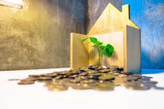 Plant Growing In Savings Coins stock images