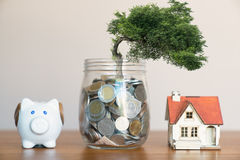 Plant Growing In Savings Coins - Investment And Interest Concept Stock Photos