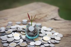 Plant growing in savings coins jar, Business growth, interest and investment concept stock photos