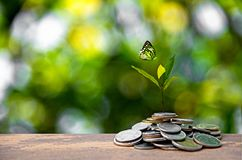Plant Growing In Savings Coins. Money coin stack growing graph. Stock Photos