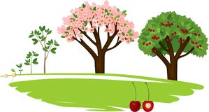 Plant growing from seed to cherry tree. stock illustration