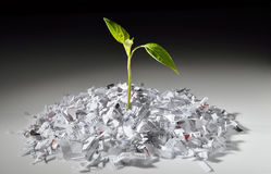 Plant growing from shredded paper stock photos
