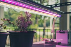 Plant growing in smart indoor farm with artificial led light. ph. Plant growing in smart indoor farm with artificial led light. spectrum phyto lamp for seedling stock image