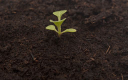 Plant growing from soil Royalty Free Stock Photos