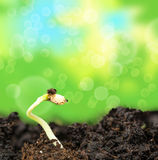 Plant growing in soil Stock Photography