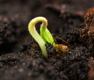 Plant growing in soil Stock Photos