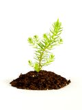 Plant growing in soil stock images