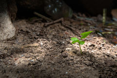 Plant Growing in Soil  and Grow Concept. Growing,Plant Stock Image
