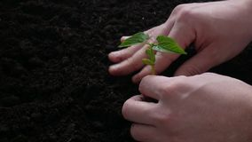 Plant growing on soil with hand watering stock footage
