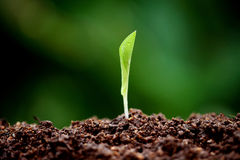 Plant growing from soil Royalty Free Stock Images