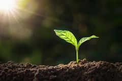 plant growing on soil with sunshine. eco earth day concept