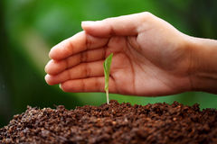 Plant growing from soil Stock Photos