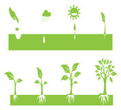 Plant Growing. Stages of a growing plant illustration royalty free illustration