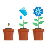 Plant growing stages. Royalty Free Stock Image