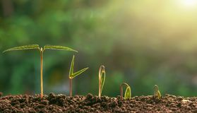 plant growing step in garden with morning light. agriculture con stock photos